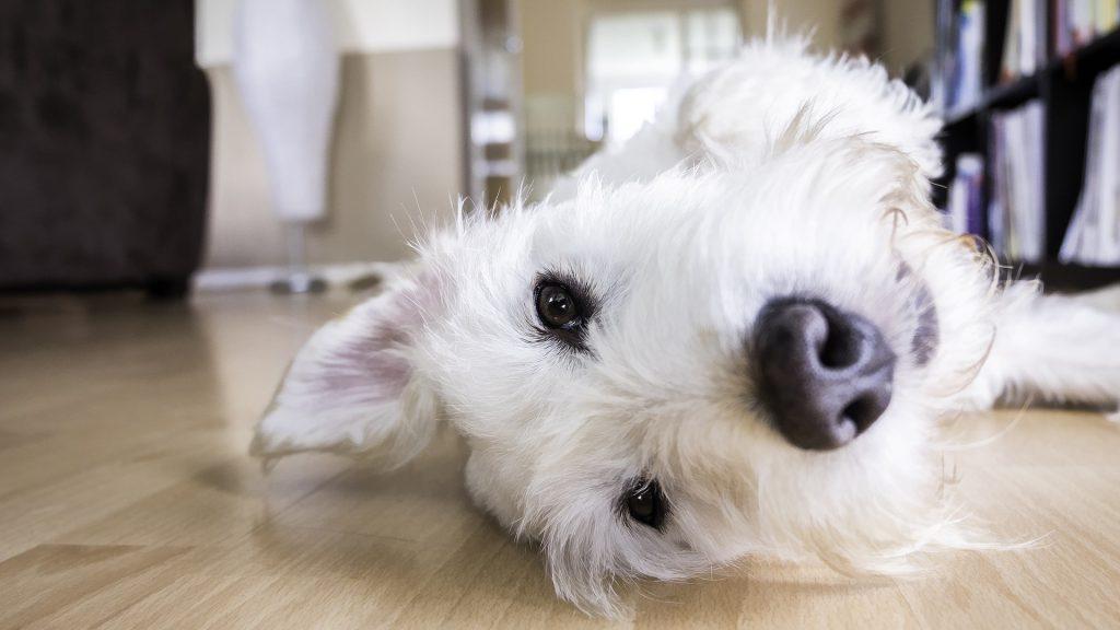 קחו נשימה טיפים לניקיון יעיל לבית שיש בו כלב.